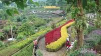 Selain indah, Rainbow Garden juga unik, sebab bunganya aman untuk dimakan