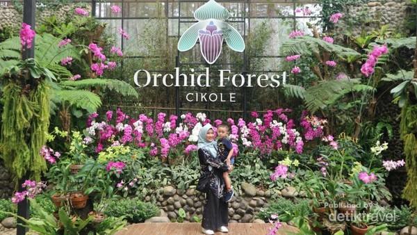 Sebagai kawasan konservasi, berbagai jenis anggrek langka dari Indonesia dan mancanegara bisa ditemukan di orchid forest Cikole.