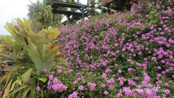 Serasa pikiran segar kembali setelah menikmati keindahan aneka bunga yang mempesona