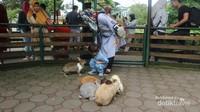 Tersedia tempat bermain bersama kelinci di Farm House