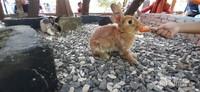 Salah satu kelinci imut yang ada di taman kelinci Floating Market