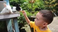 Cukup membeli pakan kelinci saja, maka kita bisa bermain dan memberi makan kelinci di Maribaya Hot Spring Resort