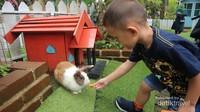 Hanya di rabbit forest kita bisa bermain bersama kelinci di tengah kesejukan pepohonan pinus