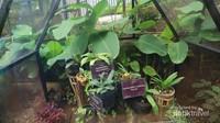 Tidak dipungut biaya tambahan untuk masuk ke dalam orchid house