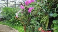 Aneka anggrek di orchid forest bisa ditemukan di Orchid House