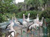 Salah satu spot foto favorit pengunjung, kandang burung pelikan.