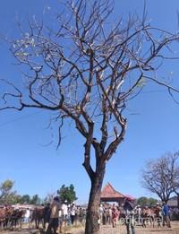 Pohon dan langit