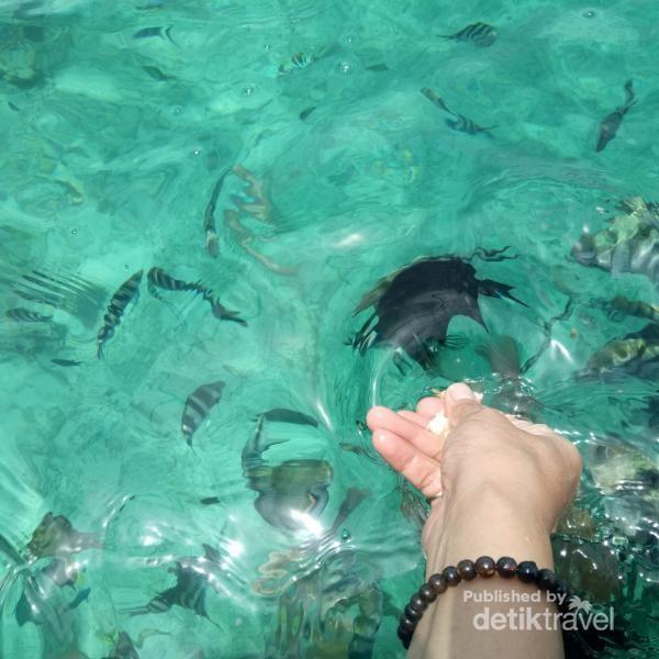 Air yang jernih sehingga ikan yang menguninya sangat terlihat jelas.
