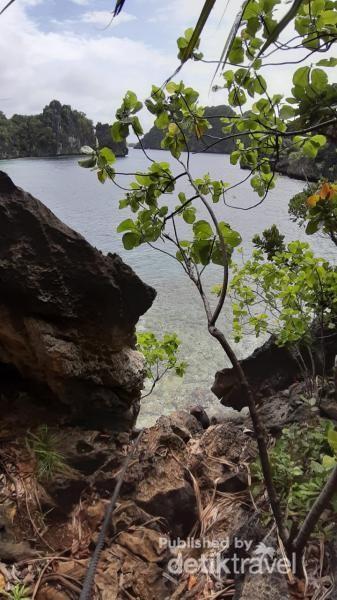 Raja Ampat Juga Punya Danau Ubur-ubur Tak Menyengat