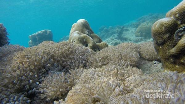 Pemandangan bawah laut di pulau Tidung