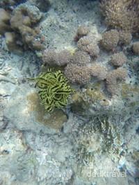 Beberapa biota laut menghiasi bawah laut.