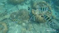 Ikan-ikan penghuni perairan sekitar Tidung