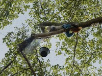 Proses mengasapi untuk mengusir lebah hutan dari sarangnya. Butuh waktu lumayan lama karena proses ini mendapatkan perlawanan dari lebah-lebah hutan.