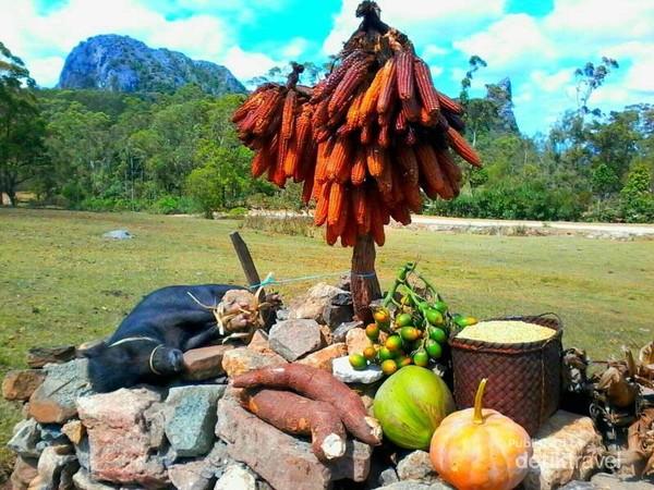 Mesbah atau semacam tempat para masyarakat Mollo menaruh hasil panen.