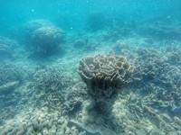 Terumbu karang di spot Cemara 2