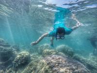 Snorkeling mencari ikan nemo dan teman-temannya