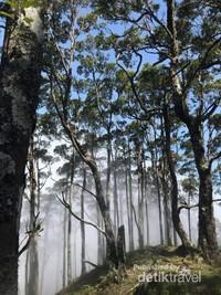 Berbagai jenis pohon yang menjulang tinggi ikut mempercantik puncak gunung ini. (Esti Renatalia Tanaem)