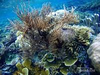 Terumbu karang di Yenbuba