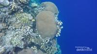 Terumbu karang ditepi lautan dalam