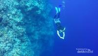 Snorkeling atau free diving merupakan kegiatan yang biasa dilakukan disini