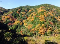 Pegunungan Rokko di pertengahan bulan November