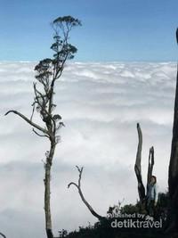 Puncak gunung mutis dijamin bisa memanjakan kalian dengan reruntuhan kabutnya yang begitu mesra.