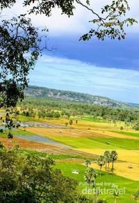 Kalian bisa menikmati udara segar dengan pemandangan yang sangat menakjubkan dari persawahan dikabupaten Timor Tengah Selatan.
