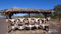 Pajangan fosil-fosil kerbau ini menjadi spot favorit para traveler untuk mengambil foto.