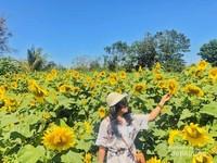 Ketika kalian memasuki tempat ini, kalian akan langsung disambut dengan udara segar dan hamparan bunga matahari yang begitu indah.