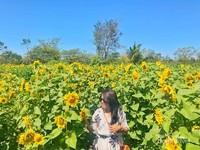Ditengaj taman bunga ini kalian bisa mengambil gambar sepuas kalian.