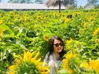 Windy manalor ditengah hamparan bunga matahari.
