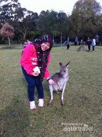 Berfoto dengan hewan andalan Australia, Kanguru!