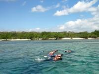 Bila berkunjung ke pulau Menjangan, cobalah snorkeling. Airnya cenderung tenang, jadi jangan takut bakal terseret arus.