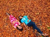 Reruntuhan daun mahoni yang menutup permukaan tanah membuat suasana ditempat ini begitu romantis.