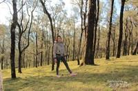 Pemandangan hutan ampupu yang indah dengan warna kuning keemasannya.