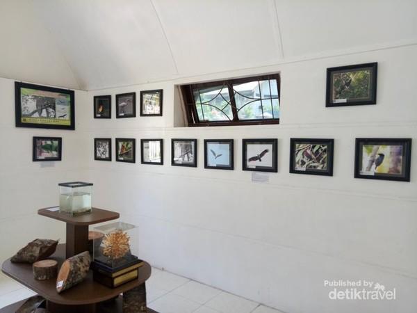 Koleksi foto keragaman fauna hutan pulau tarakan