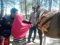 Kuda butuh sentuhan