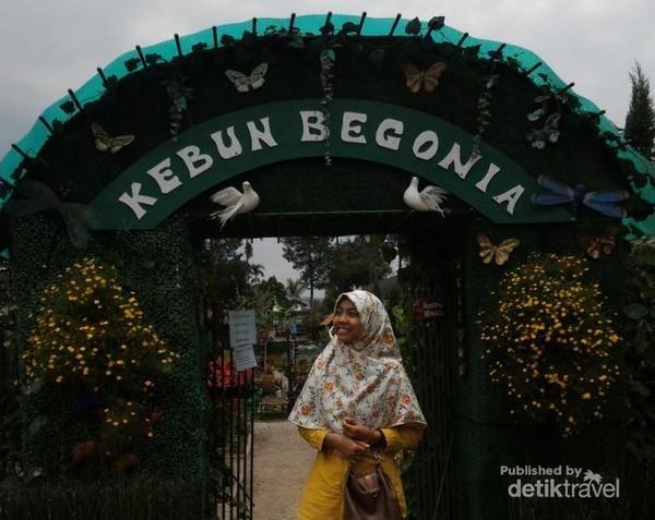 Selamat datang di Kebun Begonia