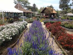 Taman Bunga Indah di Lembang, Bikin Tak mau Pulang