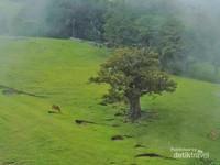 Hamparan perbukitan hijau yang masih alami didesa Fatuulan.