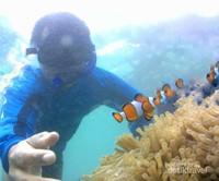 Hai Nemo, Apa Kabar