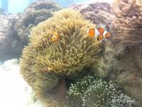 Nemo yang ingin saya temui