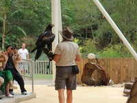 Bird Show  di Currumbin Wildlife Sanctuary