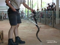 Reptile Show  di Currumbin Wildlife Sanctuary