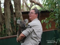 Memeluk koala  di Currumbin Wildlife Sanctuary