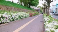 Sepanjang jalan menuju istana yang penuh bunga dan pepohonan yang asri.