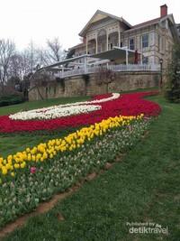 Keindahan White Pavilion begitu memancarkan pesona nya dengan kecantikan sekumpulan bunga tulip.