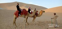 Pengalaman pertama menaiki unta di Padang Pasir Abu Dhabi