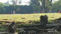 Hewan lainnya yang ada di taman ini adalah monyet. Mereka dibiarkan bebas tanpa dikurung di kandang.