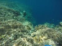 Diluar danau kakaban kita juga bisa menikmati keindahan bawah lautnya. Berbagai biota laut bisa kita temui.